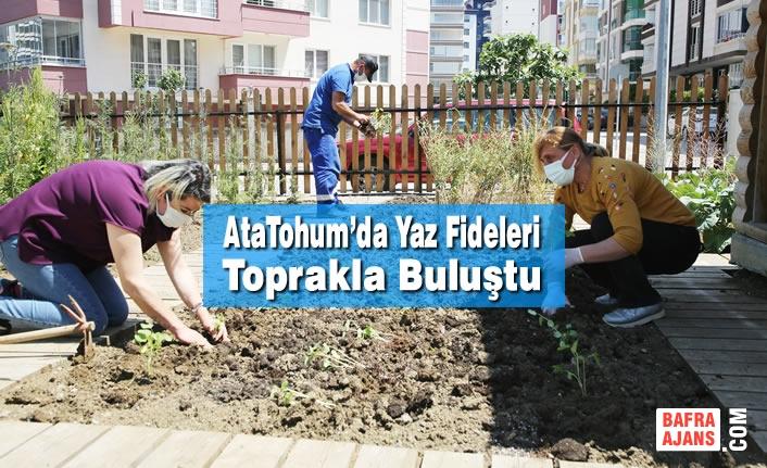 AtaTohum'da Yaz Fideleri Toprakla Buluştu