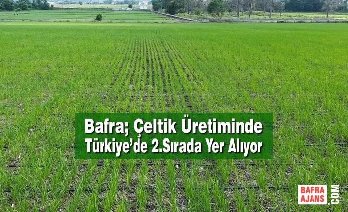 Bafra; Çeltik Üretiminde Türkiye'de 2.Sırada Yer Alıyor