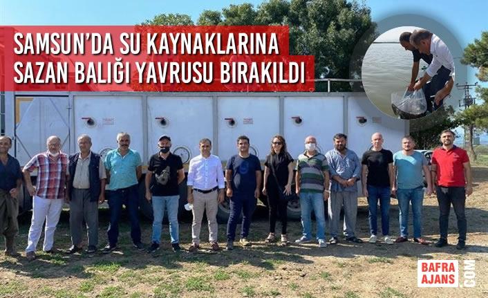 Samsun'da Su Kaynaklarına Sazan Balığı Yavrusu Bırakıldı