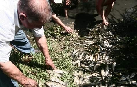 Bursa'da Balık Ölümleri Korkuttu