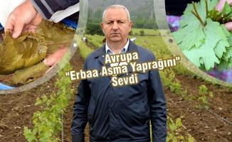 Erbaa'dan Avrupa'ya 500 Ton Asma Yaprağı İhraç Edildi