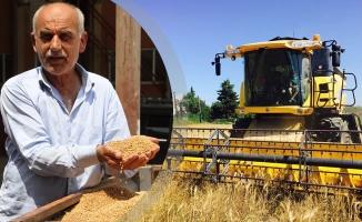Bafra Ovası'nda Buğday Alımları Başladı