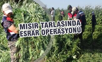 Bafra'da Uyuşturucu Operasyonu; 1 Kişi Aranıyor