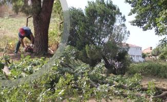 Doğa ve Milli Parklar Şefliği Bahçesini Koruyamadı
