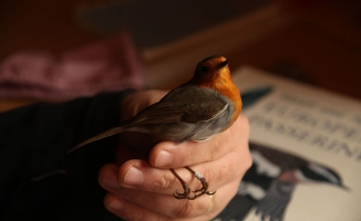 Kızılırmak Deltası'nda Kuş Halkalama Çalışmaları