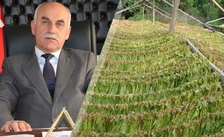 Bafralı Tütün Üreticileri Bu Seneden Umutlu