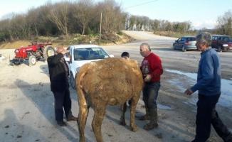 Bartın'da inek kurtarma operasyonu