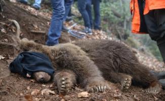 Düzce'de kapana yakalanan ayı kurtarıldı