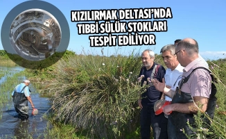 Kızılırmak Deltası'nda Tıbbi Sülük Stokları Tespit Ediliyor