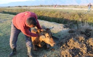 Tokat'ta su kanalına düşen ineği itfaiye kurtardı