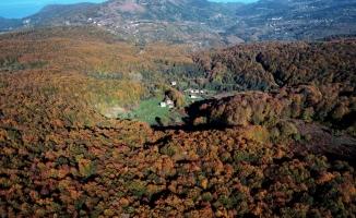 Kastamonu'da sonbahar renklerinin görsel şöleni