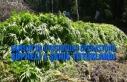 Samsun'da Uyuşturucu Operasyonu; Şüpheli 4 Şahıs...