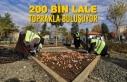 200 Bin Lale Toprakla Buluşuyor