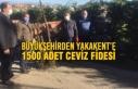 Büyükşehirden Yakakent'e 1500 Adet Ceviz Fidesi