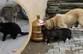 Alaçam Belediyesi Sokak Hayvanlarını Unutmadı