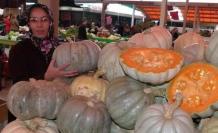 Bafra'da Bal Kabağı İlgi Görüyor