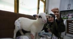 Bebek Beziyle Bezledikleri Kuzuya Evde Bakıyorlar