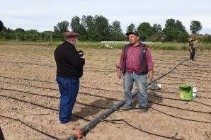 Sebze Üreticileri Çeltiğe Yöneliyor