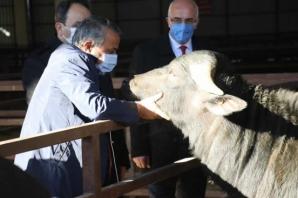 Bafra'da Manda Combası Dağıtımı Yapıldı
