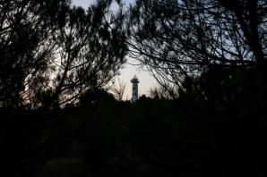 Ağaçların Çevrelediği Deniz Feneri