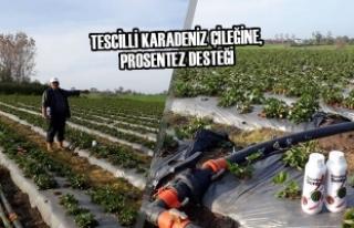 Tescilli Karadeniz Çileğine, Prosentez Desteği