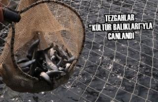 """Tezgahlar """"Kültür Balıkları""""yla Canlandı"""