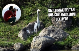 Kızılırmak Deltası Kuş Gözlemcilerini Bekliyor