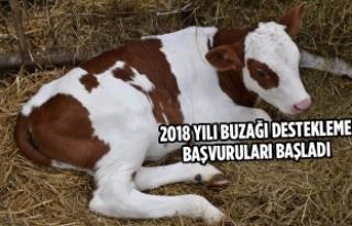 2018 Yılı Buzağı Destekleme Başvuruları Başladı