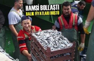 Hamsi Bollaştı Balık Fiyatları Düştü