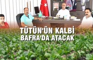 Tütün'ün Kalbi Bafra'da Atacak