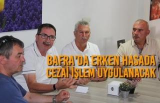 Bafra'da Erken Hasada Cezai İşlem Uygulanacak