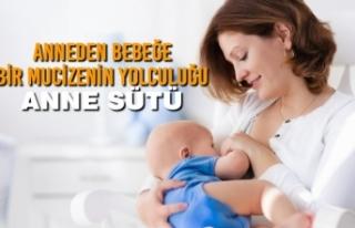 Anneden Bebeğe Bir Mucizenin Yolculuğu; Anne Sütü