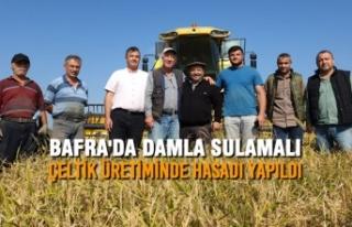 Bafra'da Damla Sulamalı Çeltik Üretiminde...