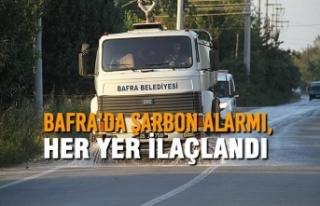 Bafra'da Şarbon Alarmı, Her yer ilaçlandı
