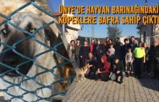 Ünye'de Hayvan Barınağındaki Köpeklere Bafra...