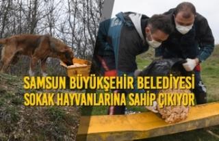 Samsun Büyükşehir Belediyesi, Sokak Hayvanlarına...