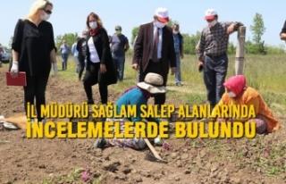 İl Müdürü Sağlam; Salep Alanlarında İncelemelerde...