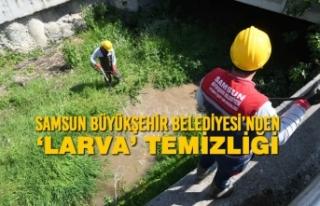 Samsun Büyükşehir Belediyesi'nden 'Larva'...