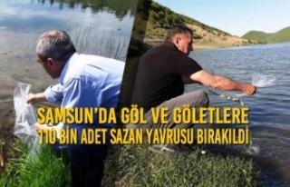 Samsun'da Göl ve Göletlere 110 Bin Adet Sazan...