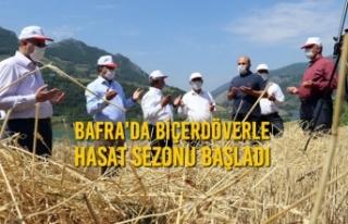 Bafra'da Biçerdöverle Hasat Sezonu Başladı