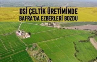 DSİ Çeltik Üretiminde Bafra'da Ezberleri Bozdu