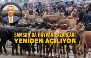 Samsun'da Hayvan Pazarları Yeniden Açılıyor