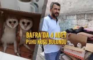 Bafra'da 4 Adet Puhu Kuşu Bulundu