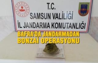 Bafra'da Jandarmadan Bonzai Operasyonu