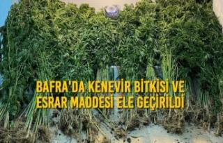 Bafra'da Kenevir Bitkisi ve Esrar Maddesi Ele...