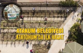 Atakum Belediyesi AtaTohum'da İlk Hasat