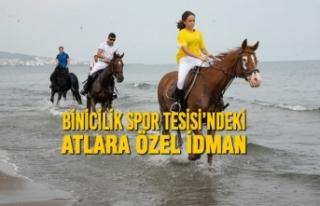 Binicilik Spor Tesisi'ndeki Atlara Özel İdman