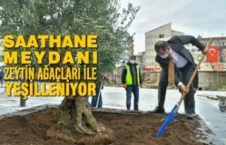 Saathane Meydanı, Zeytin Ağaçları İle Yeşilleniyor