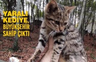 Yaralı Kediye, Büyükşehir Sahip Çıktı