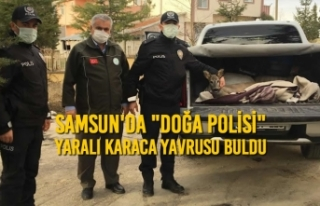 """Samsun'da """"Doğa Polisi"""" Yaralı Karaca..."""